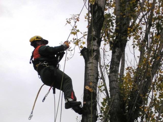 Avviso: Lavori di taglio piante luongo le linee elettriche