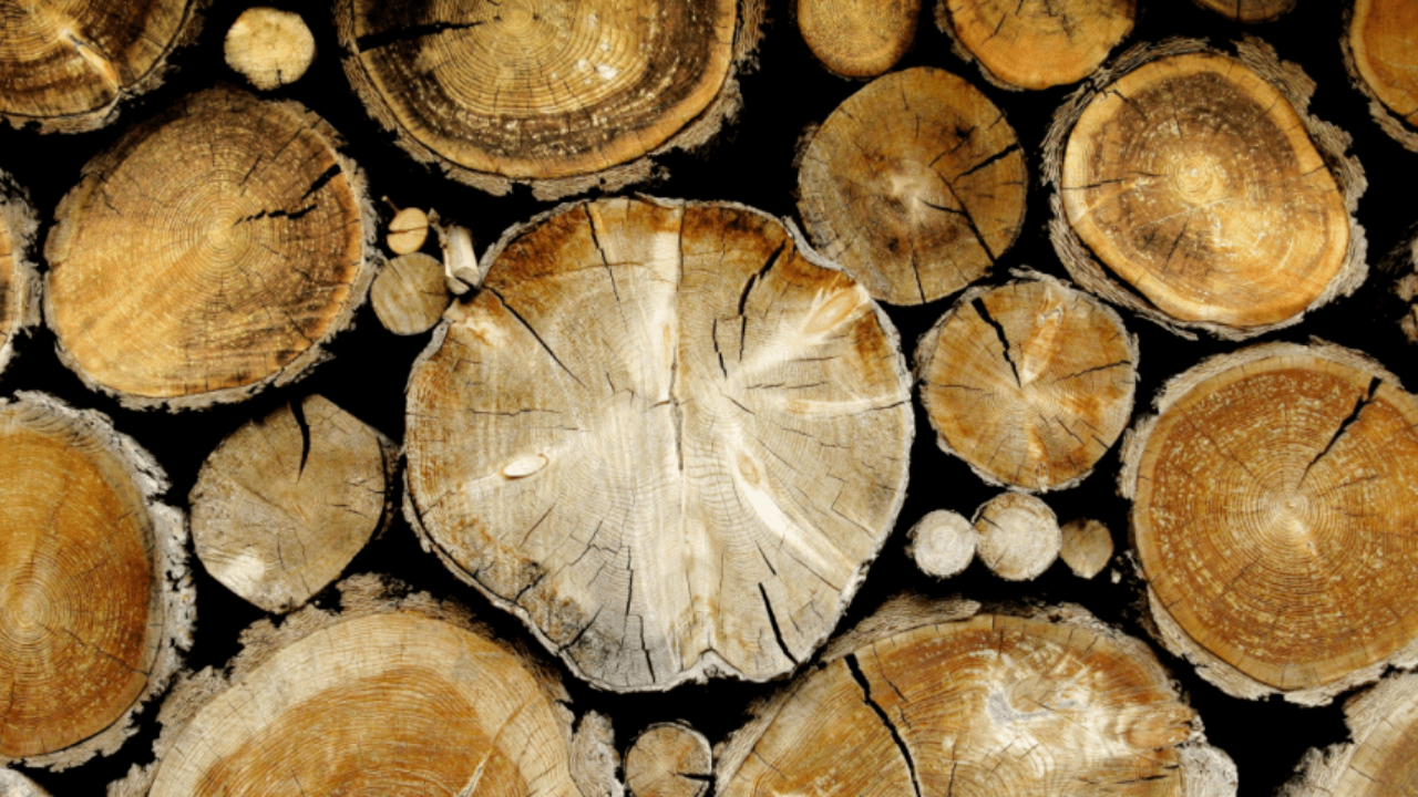 Avviso di gara pubblica per la vendita del materiale legnoso del Comune di Morino